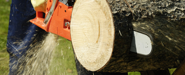 Tree Pruning with Dixieland Tree Service